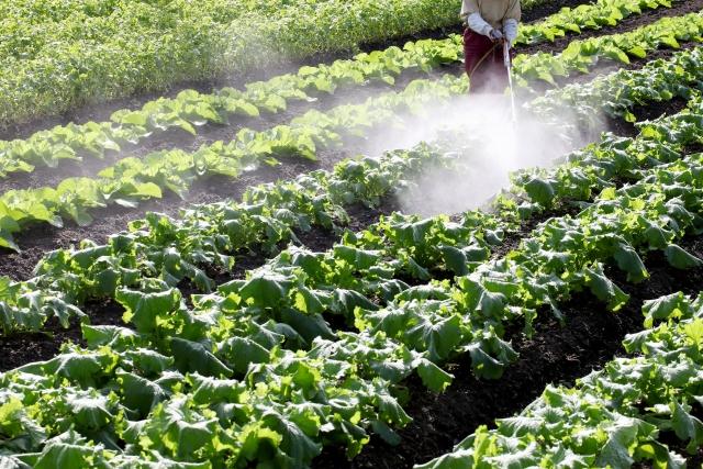 【知って得する!?農産物の栽培方法と農薬と化学肥料のお話#2】